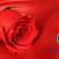 San Valentino 2015 #prestigioso